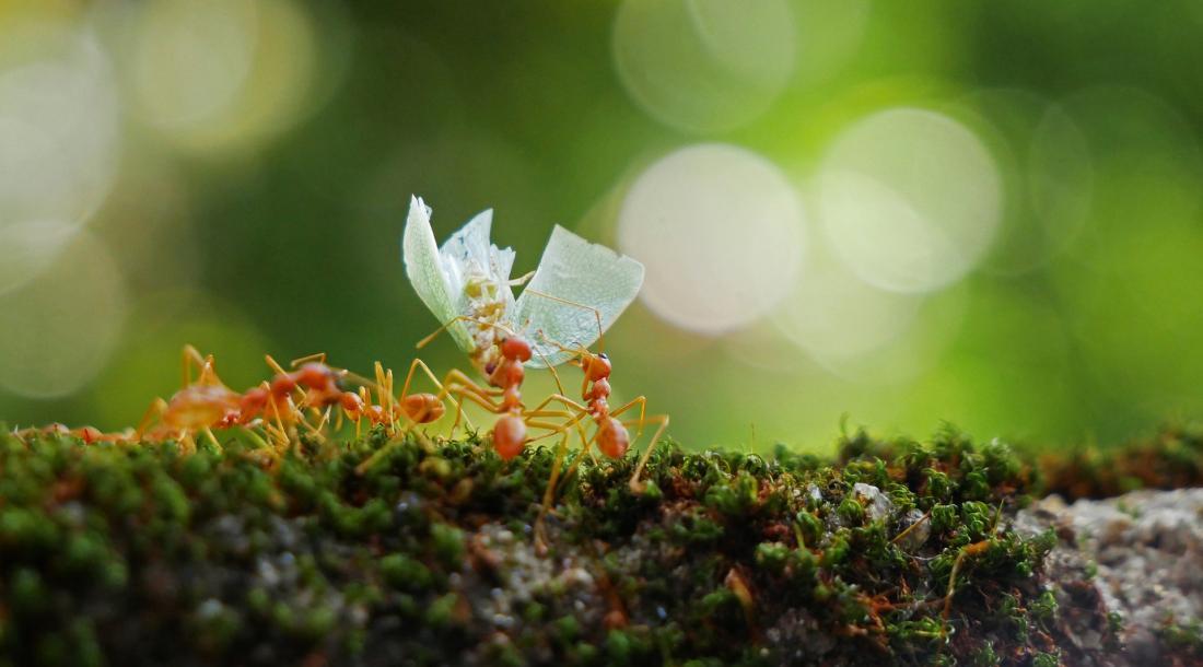 Ökologische Zusammenarbeit