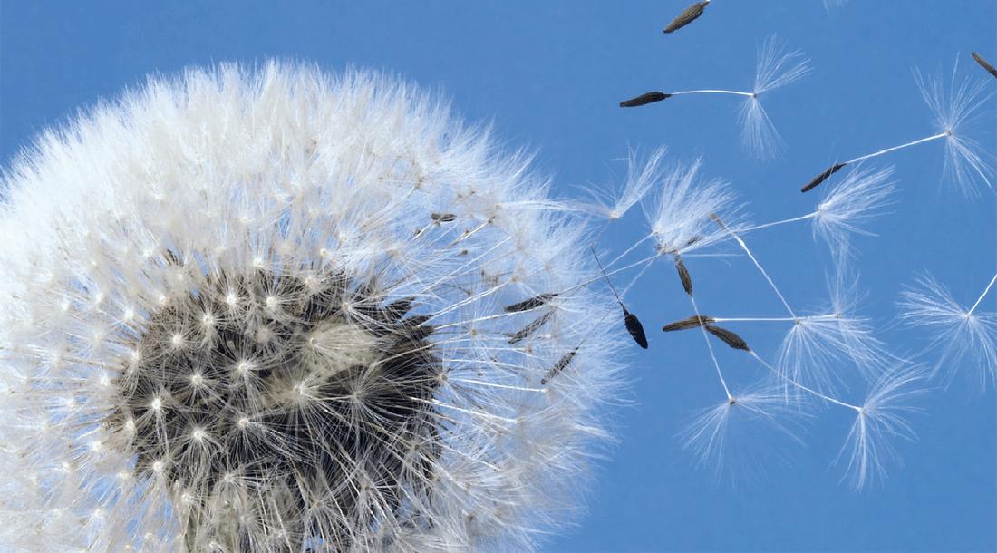Diagnose Krebs – die Rolle der Reisebegleiter