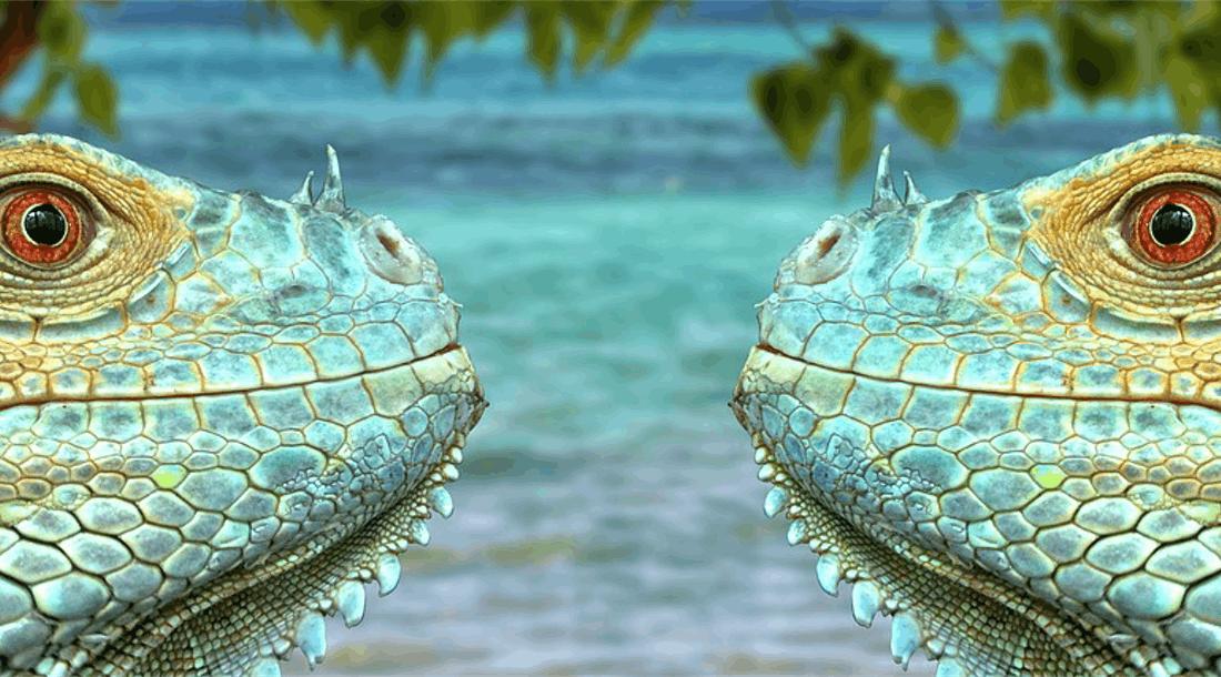 Symmetrische Konflikte: Wenn bunt blöd macht
